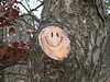 Smiley on tree cut